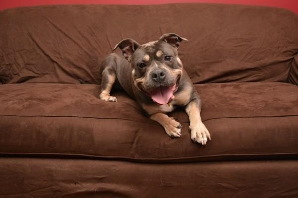 3- Eles sempre estão prontos para passar a noite com você no sofá.