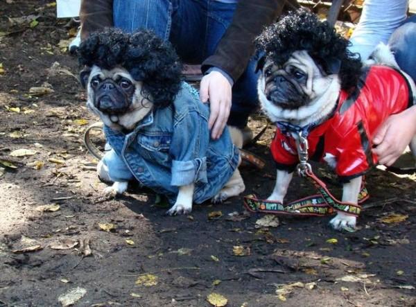 10- Os Pugs sabem do Halloween melhor do que qualquer outra raça.
