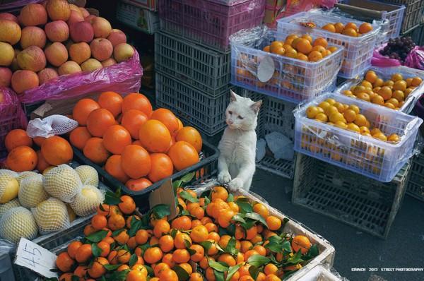 Alguém pode dar algum alimento para esse pobre gatinho!