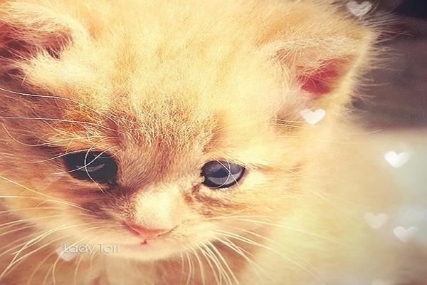 Os parasitas dos gatos também controlam sua mente