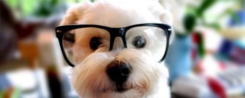 cachorro-capa tumblr