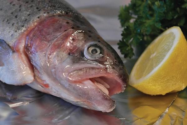 Cabeça de salmão podre
