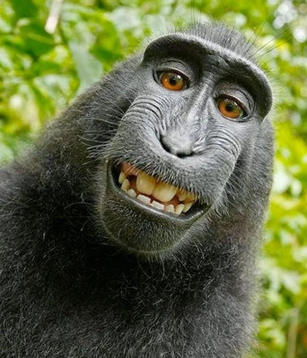 Macaco ladrãozinho