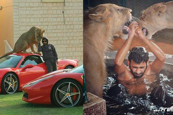 Animais, animais e mais animais