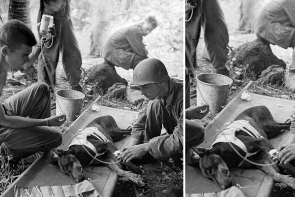 Um cão na guerra