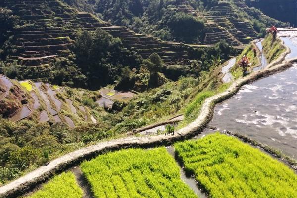 Terraças de Arroz de Banaue e Batad