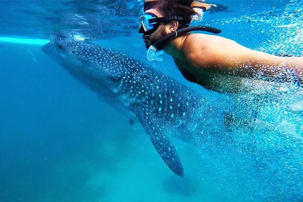 Nadar com os tubarões-baleias em Oslob