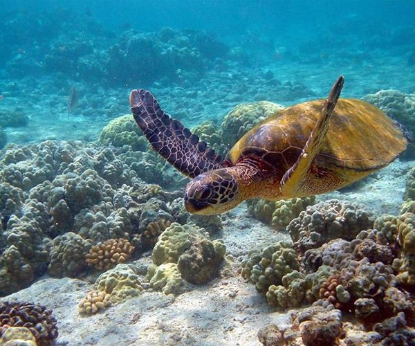 Nadar com tartarugas marinhas em Apo Island