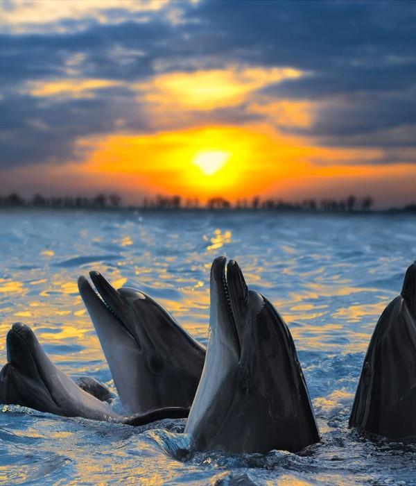 Cardumes de golfinhos em Bais