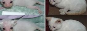 fotos-gatos-capa pinterest