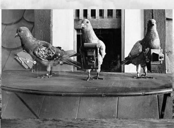 1900 Pombas usadas para tirar fotografias aéreas