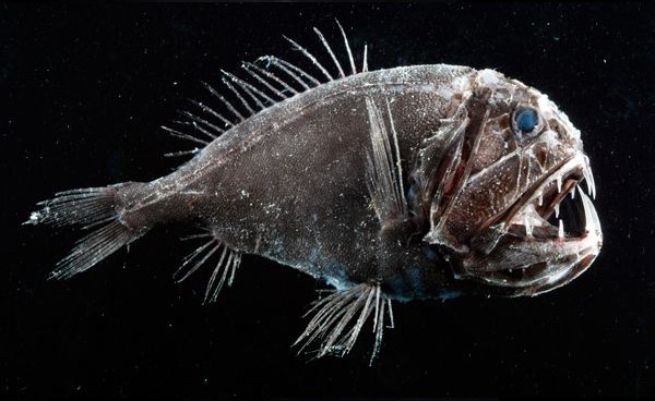Peixe-ogro