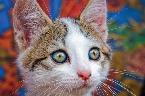 O olhar desse gato
