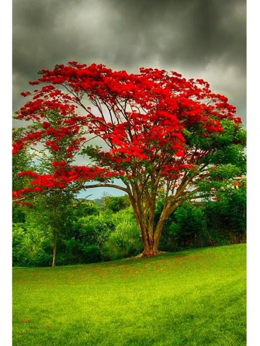 Flamboyant (Brasil)