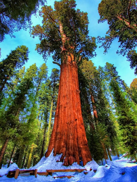 Sequoia (Estados Unidos)