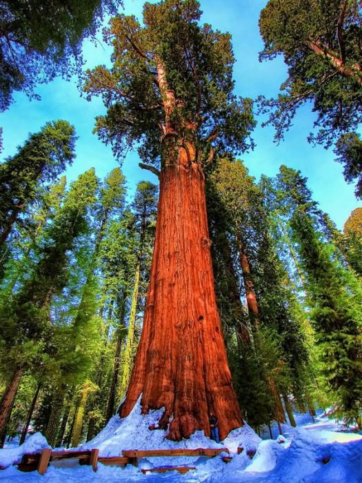 Sequoia (Estados Unidos)