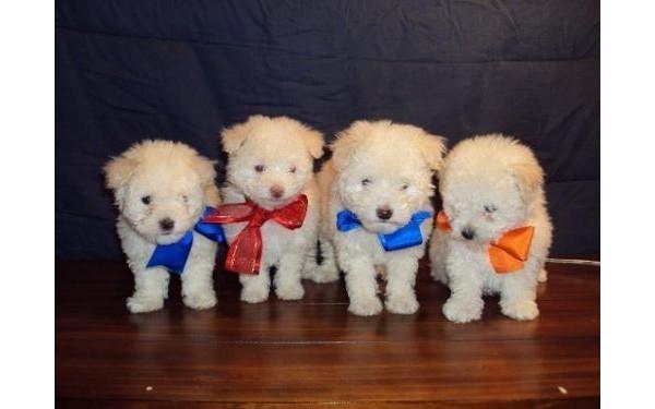 Cães lindos