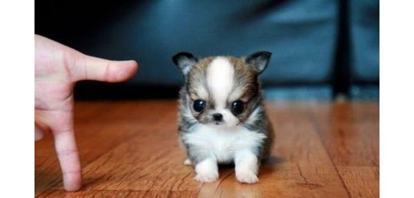 Pequeno e fofo