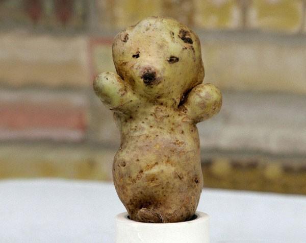 Essa batata que parece um urso