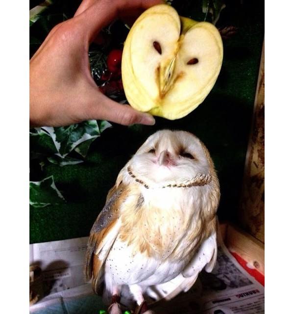 Essa maçã cortada que parece uma coruja