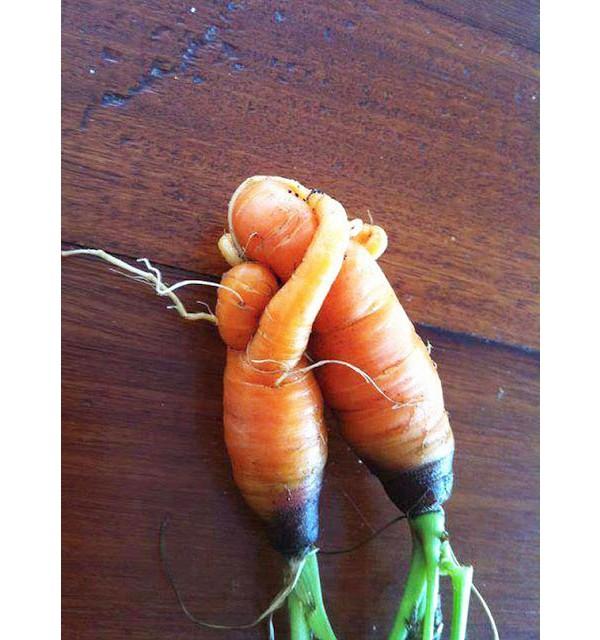 Esse casal de cenouras todo apaixonado
