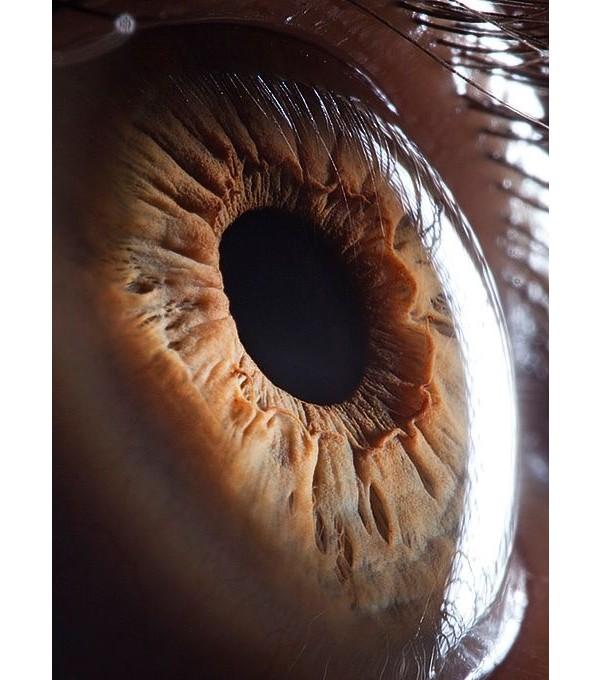 O nervo óptico cria pontos cegos no seu olho