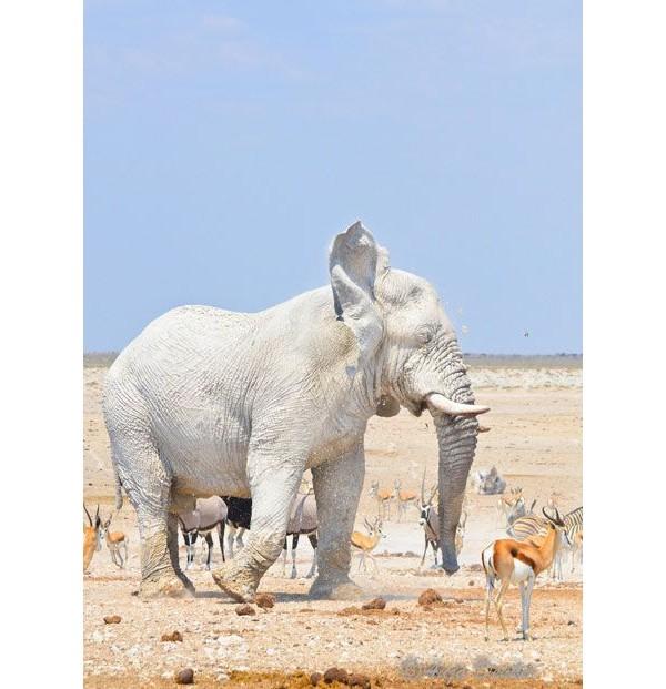 Elefante albino