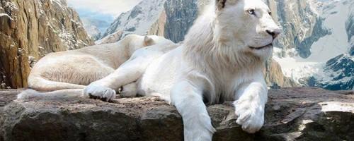 albino-animal-capa pinterest