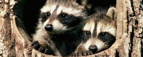 animales-capa pinterest