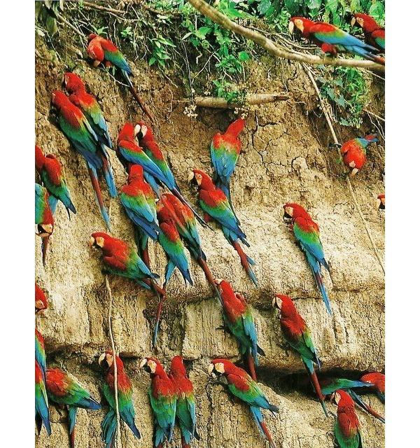 A maior biodiversidade do mundo