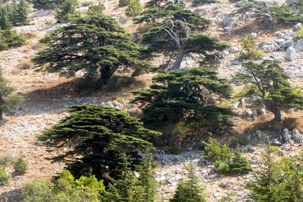 Monte al-Makmal