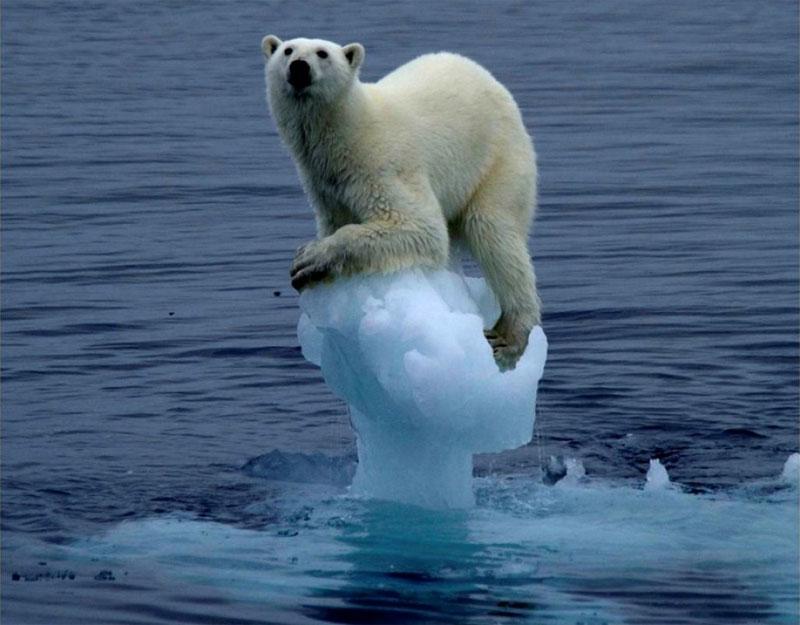 7. Extinção da fauna polar