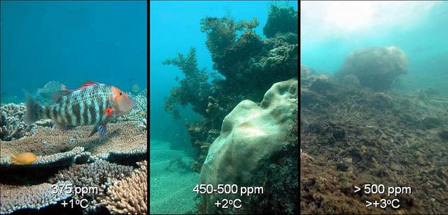 9. O aumento da temperatura e pH significa um rude golpe para a vida dos corais