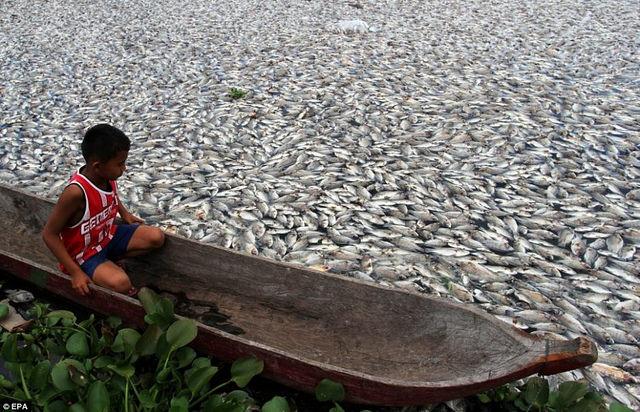 10. Milhões de peixes morrem devido à acidificação dos mares
