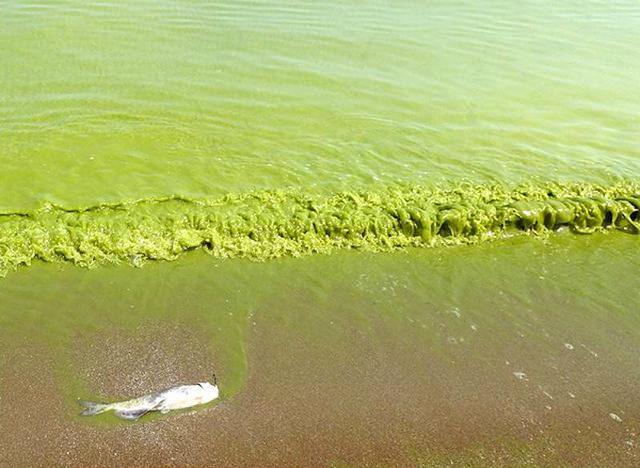11. Os problemas também estão presentes nas águas cálidas