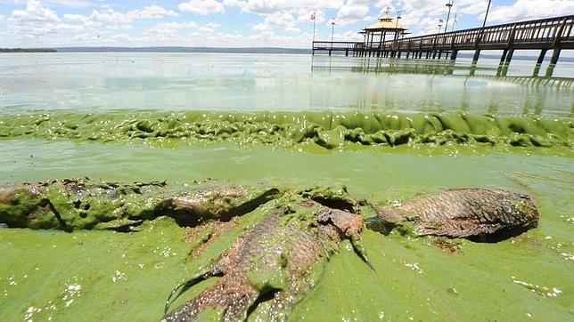 12. A poluição das águas doces representa um grande perigo para os humanos