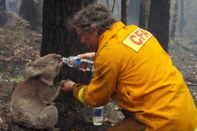 2. Água para um coala