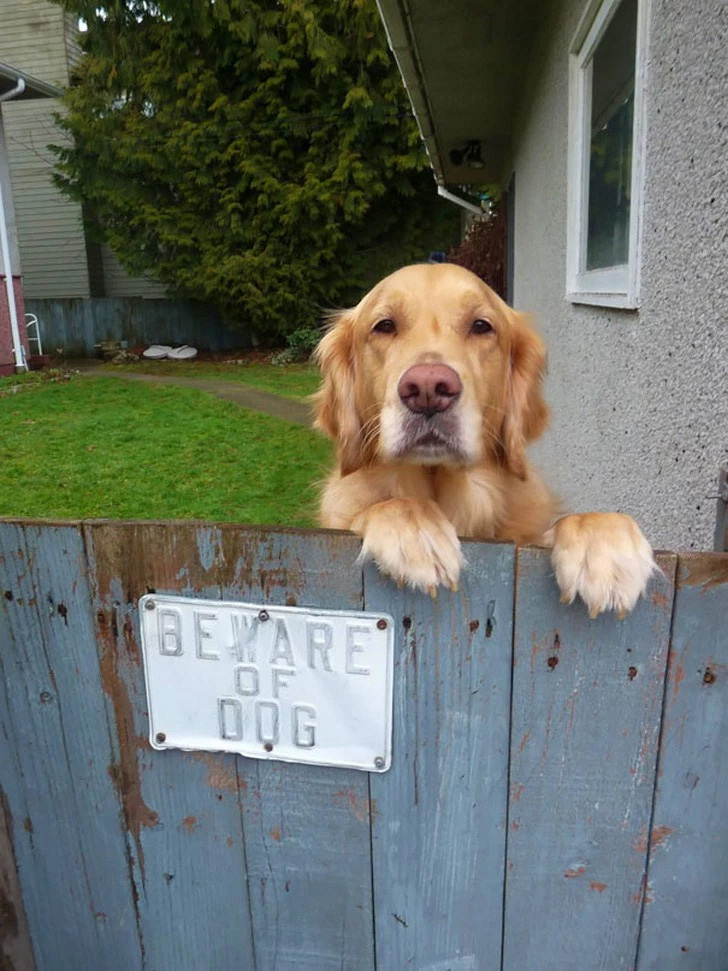 Cuidado com este cão ... ele quer brincar!