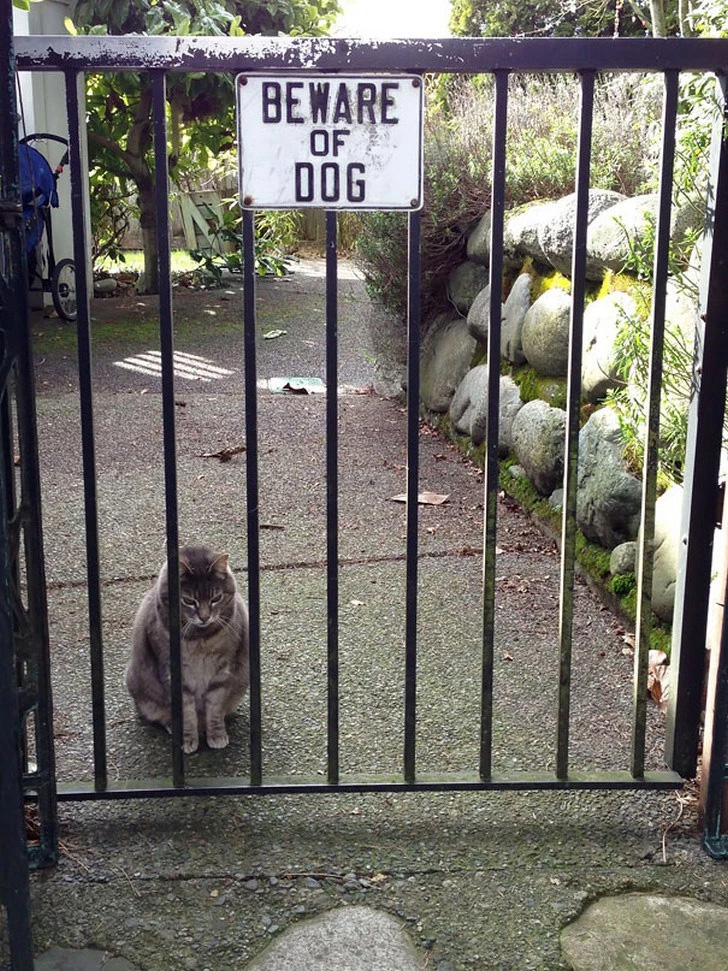 Outro gato que acredita ser um cão