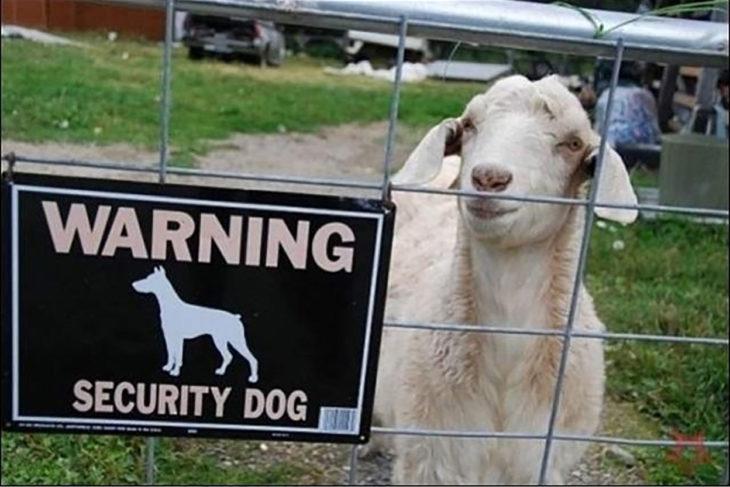 Tenha cuidado com o cão!