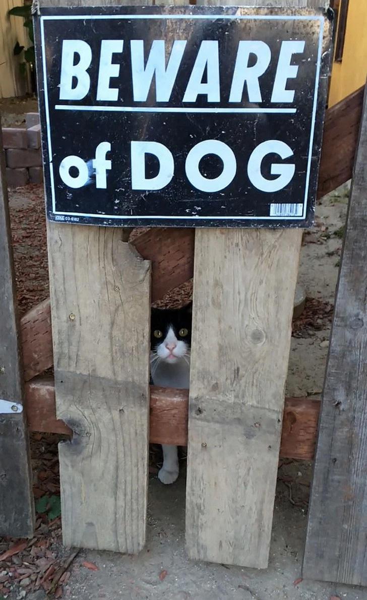 Bem, o gato que pensa que é um cachorro ...