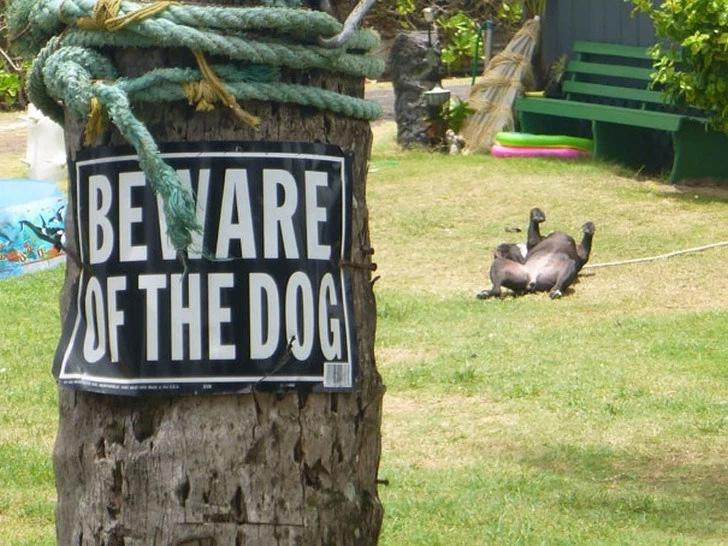 Cuidado com o cachorro ... Ele está brincando!