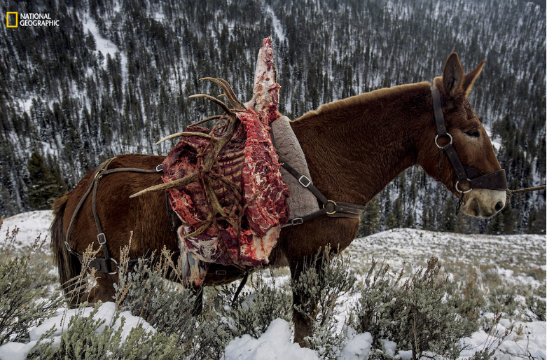 Carne de alce