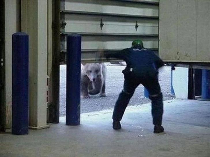 Quer um abraço de urso?