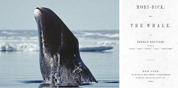Algumas das baleias vivas hoje nasceram antes que Moby Dick fosse escrito