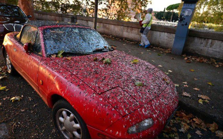 Alguém deve lavar seu carro