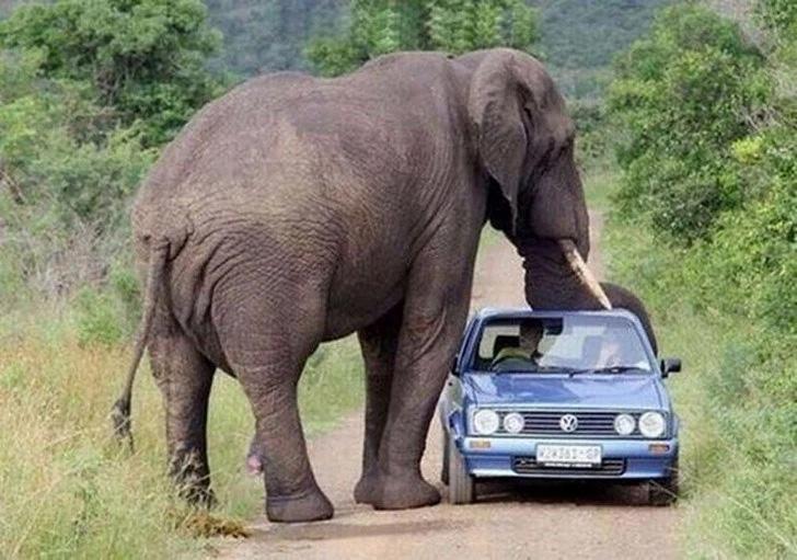 Um elefante faminto