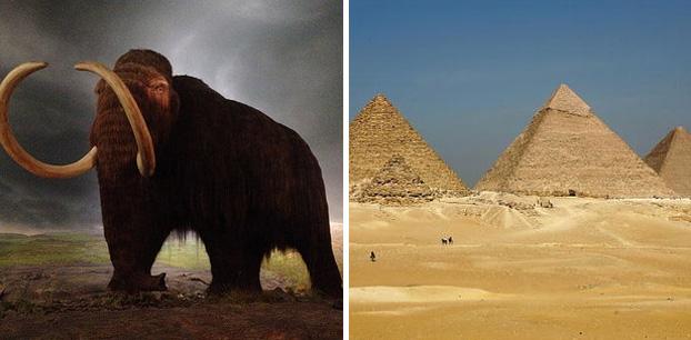 Os mamutes ainda estavam vivos quando a Grande Pirâmide de Guiza foi construida