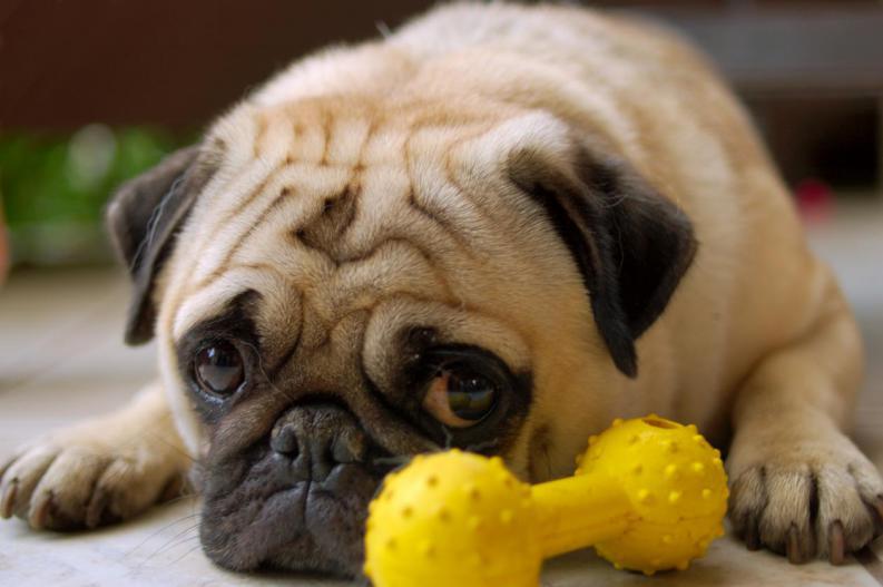 É falso que um ano de cachorro é equivalente a 7 humanos.