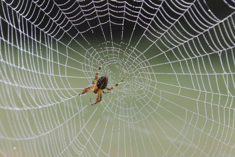 As aranhas comem teias quando querem mudarde vida.